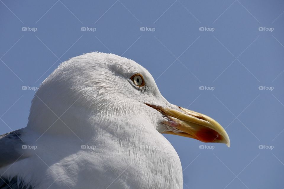 Side portrait of a seagull