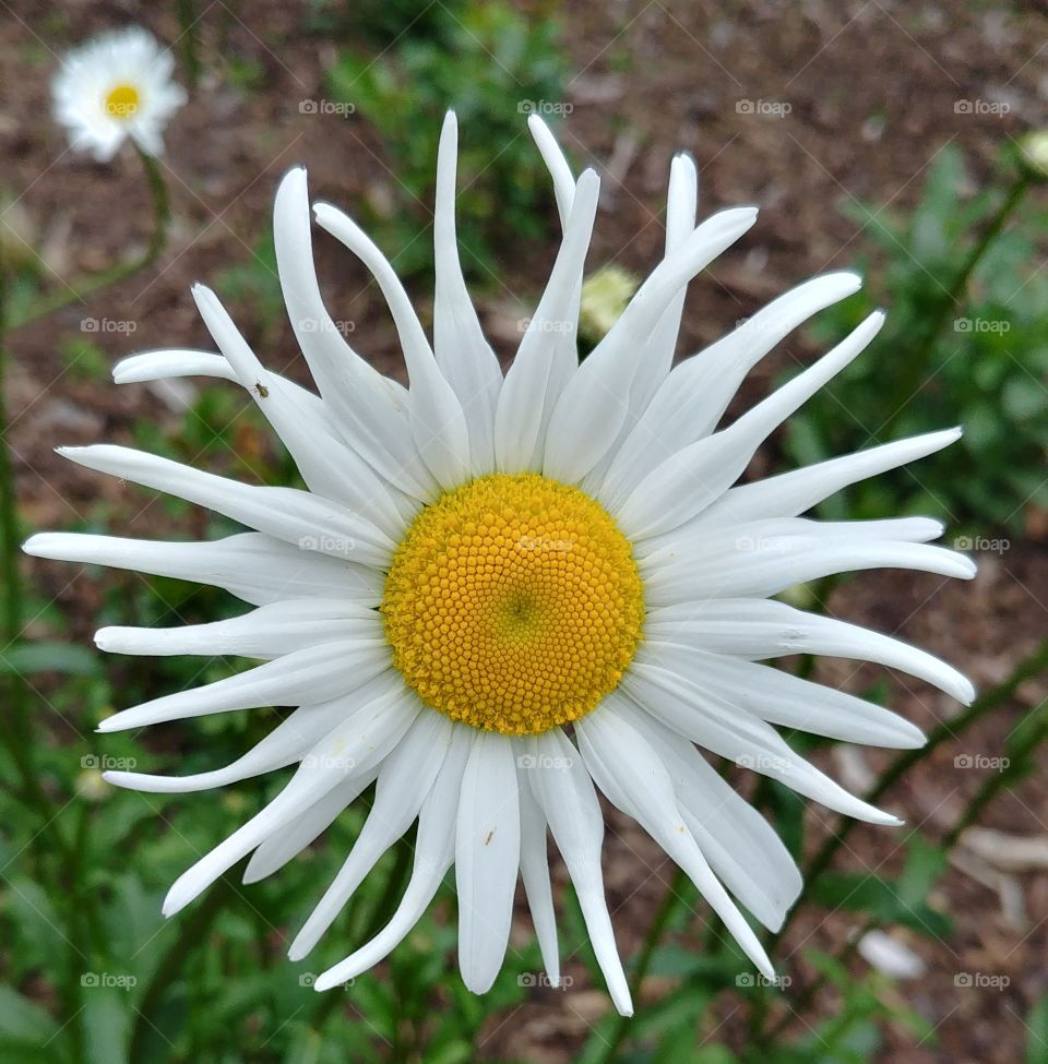 blühen Blüte blume Frühling Sommer flower
