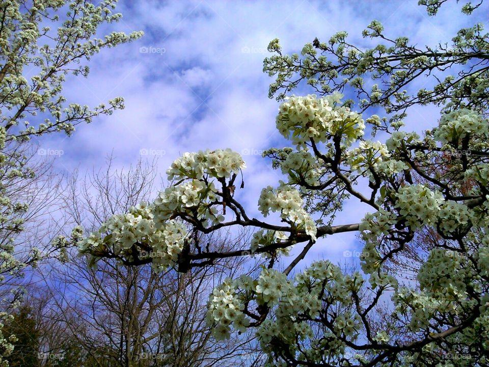 Spring Flowers. blooms in the sky