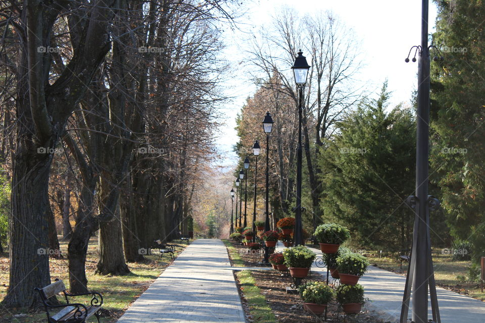 Perspective view of a public garden walkway with tall trees and tall lampposts in Autumn and flowers in pots