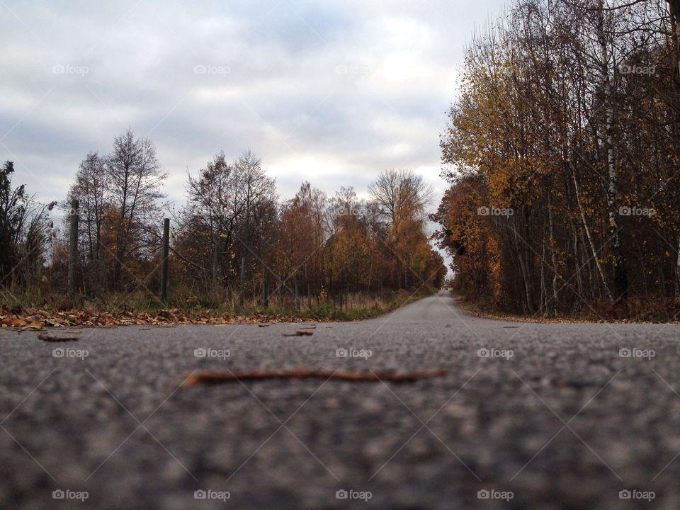 Empty road in autumn
