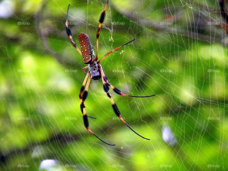 A spider's trap