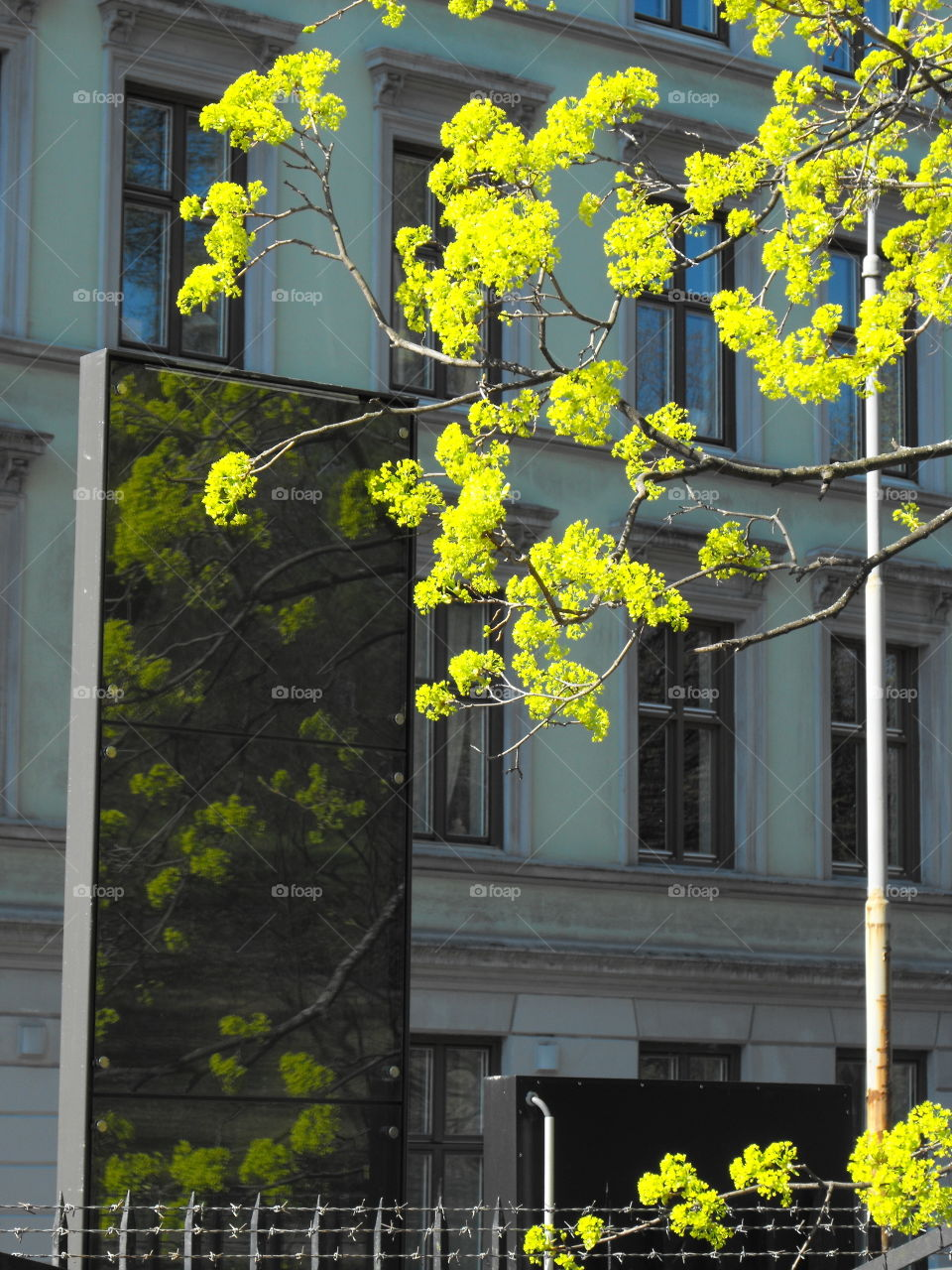 Spring Branches and Reflections in a city