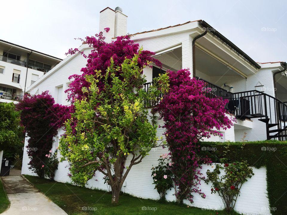 A lovely colourful wall near the marina of Pladja d'Aro