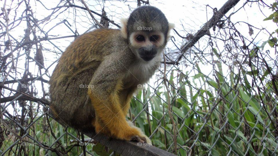 Mono observándose