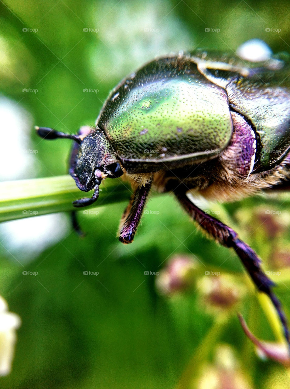 garden animals insects bugs by ka71