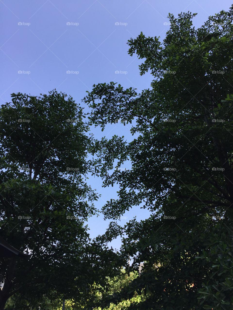 Green tree and blue sky. Taken from Kuala Lumpur