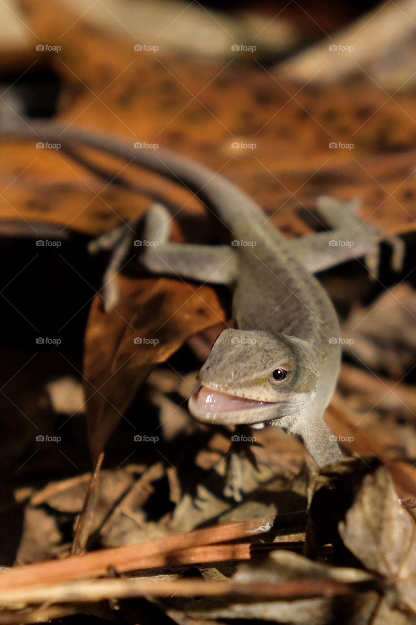 Smile! It's a lovely autumn day at Yates Mill County Park in Raleigh North Carolina! Carolina anole.