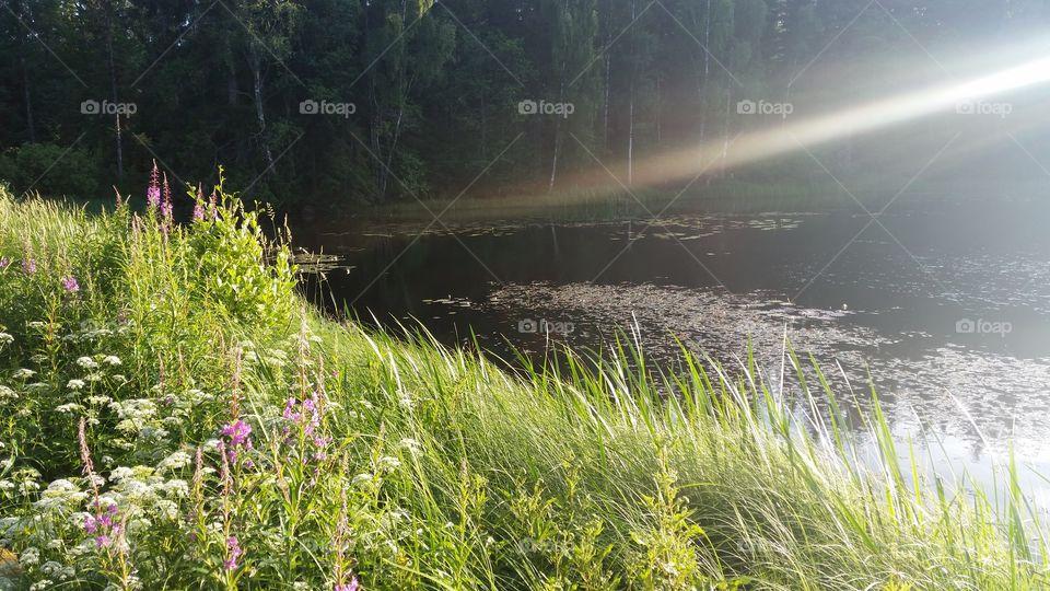 Swedish nature summertime