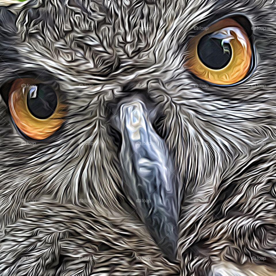Owl eyes photo art 2