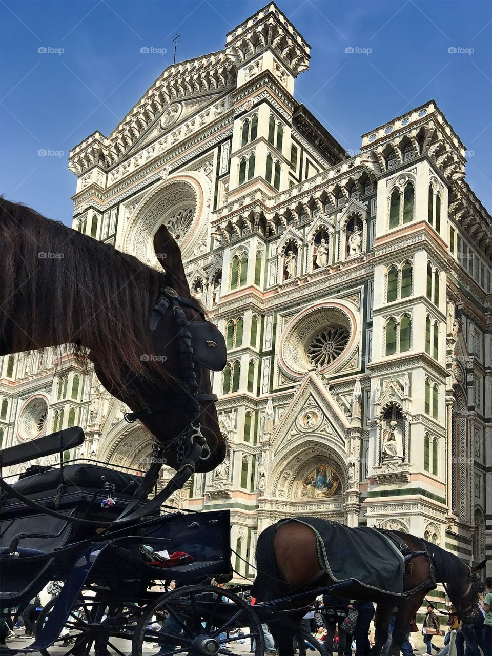 The Duomo of Florence with horse drawn carriages in front