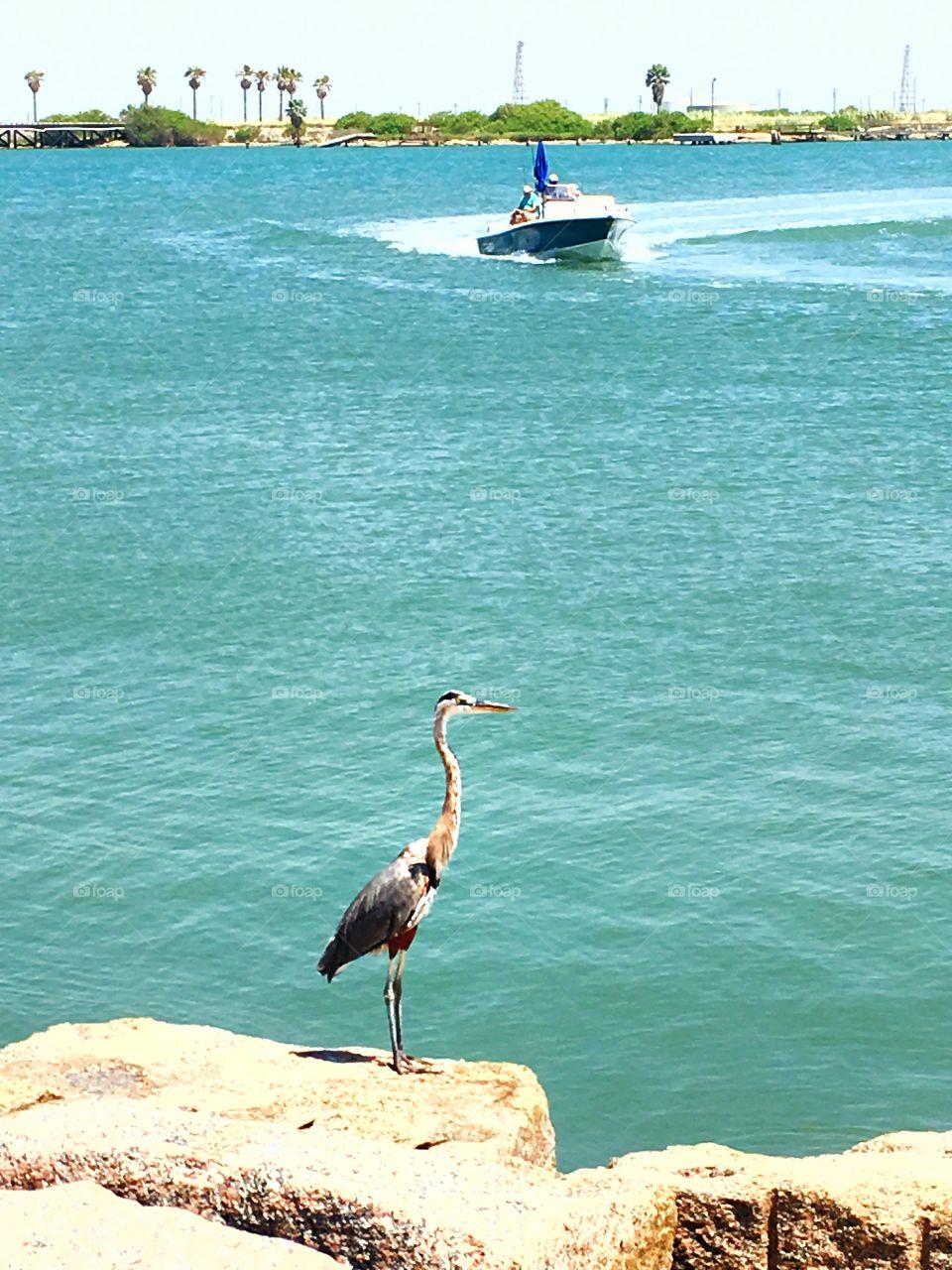 Crane on jetty in Port Aransas, Texas.