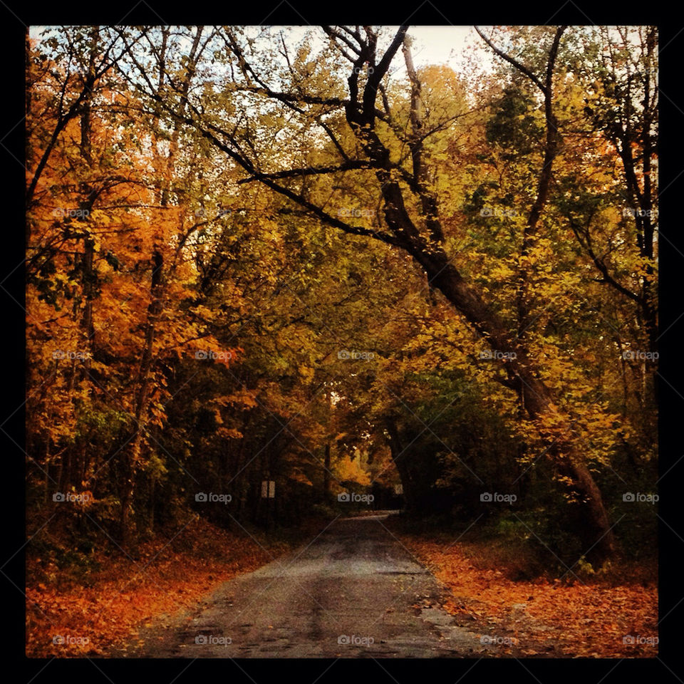 trees leaves road fall by alicia77826