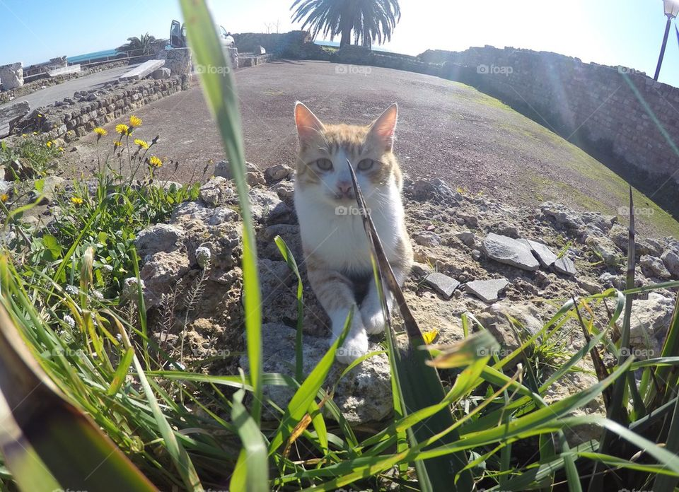 Ginger cat/ kitten lying in the sun in Carthage, Tunisia