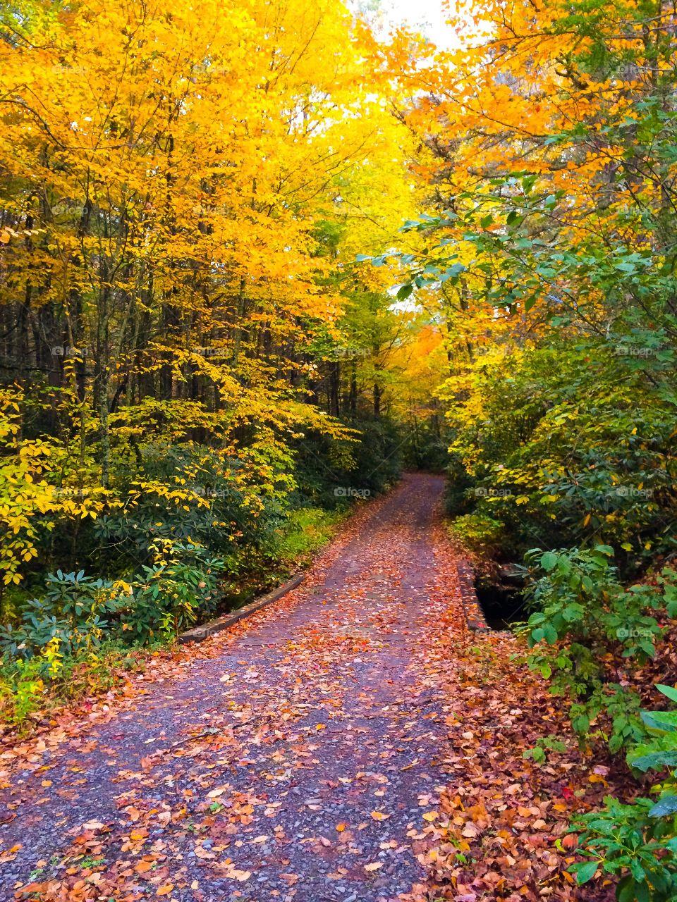 Walkway through autumn trees