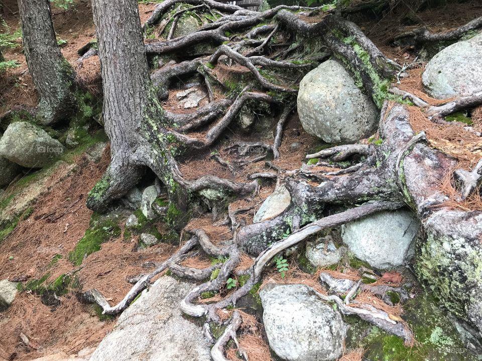 Crazy River Roots