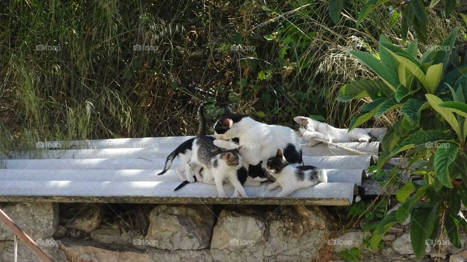 Cat family playing