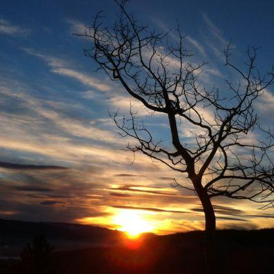 One tree One sky. Beautiful sunset