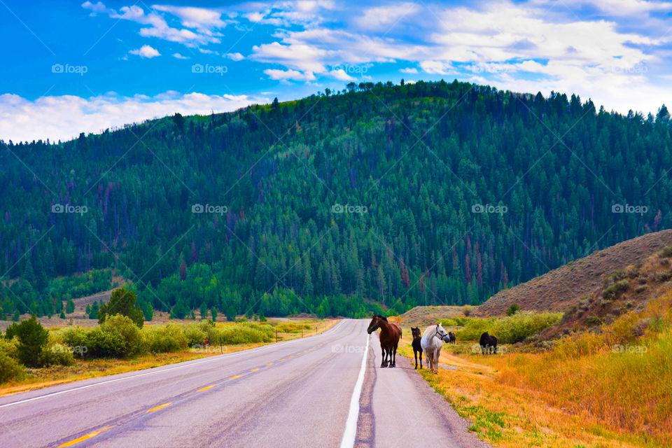 Feel peaceful driving in Yellowstone