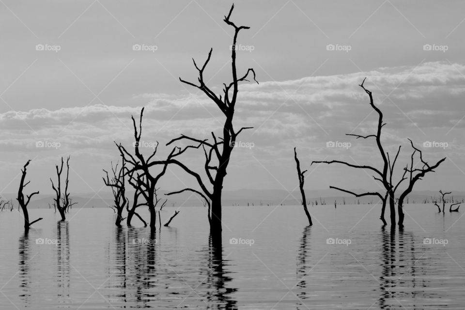 Dead tree lake