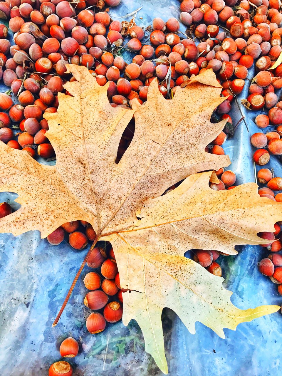 leaf and nuts