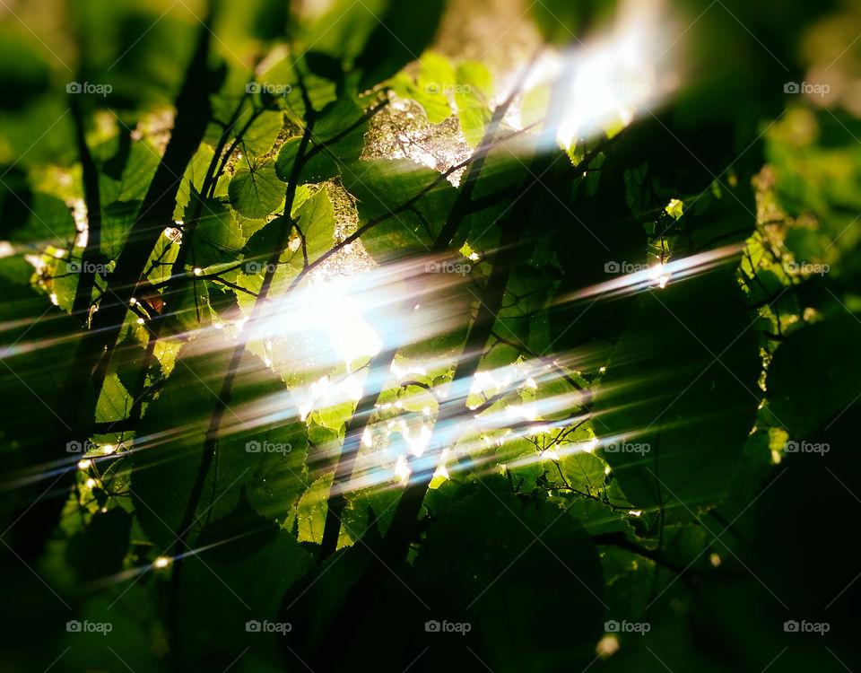 Drastic light leaks between leaves background