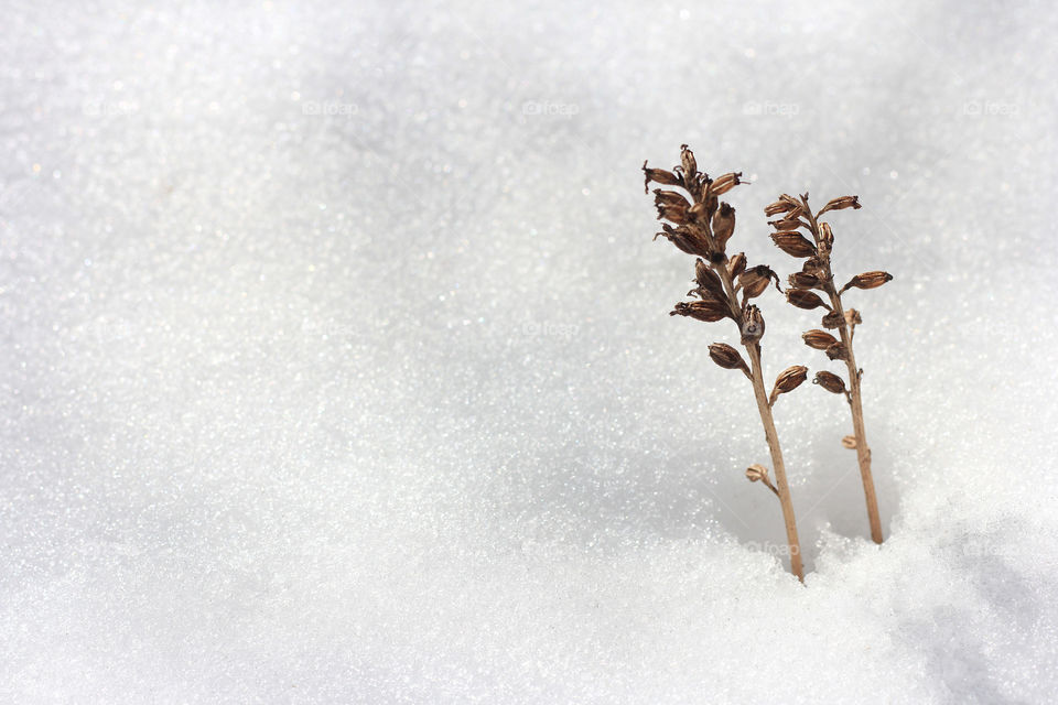 Plants growing over the snow