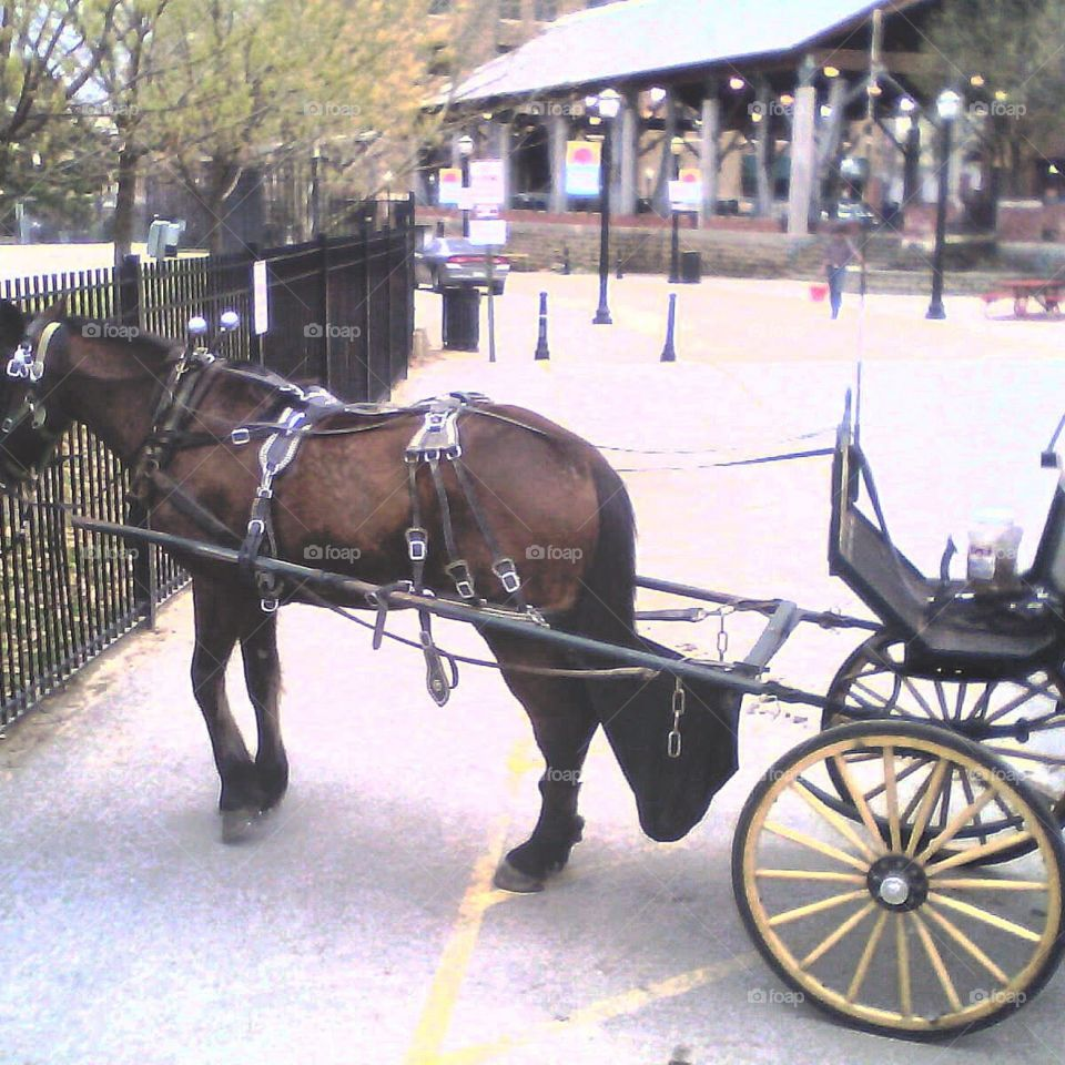 Horse and carriage at the park