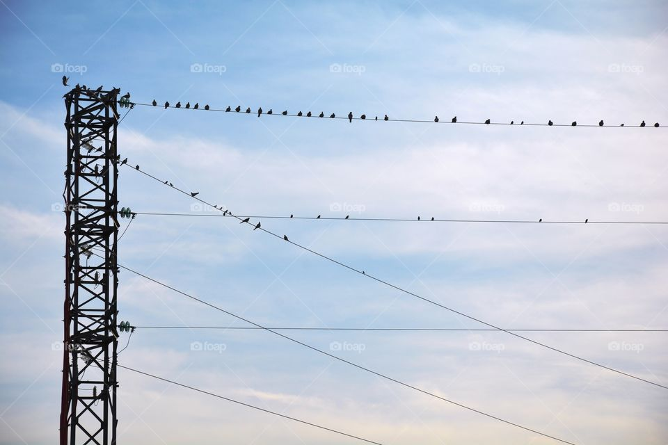 electricity tower and wires full of birds