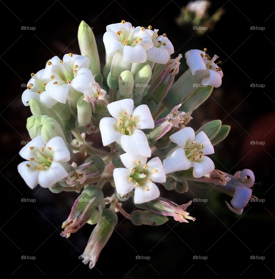 High angle view of white flower bunch