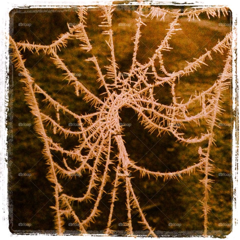 winter pretty spiders web pointy by ShutterBug_NikonGirl