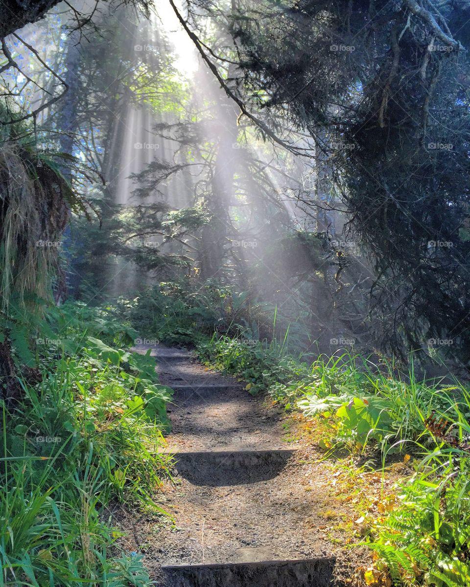 Stairway to nature heaven