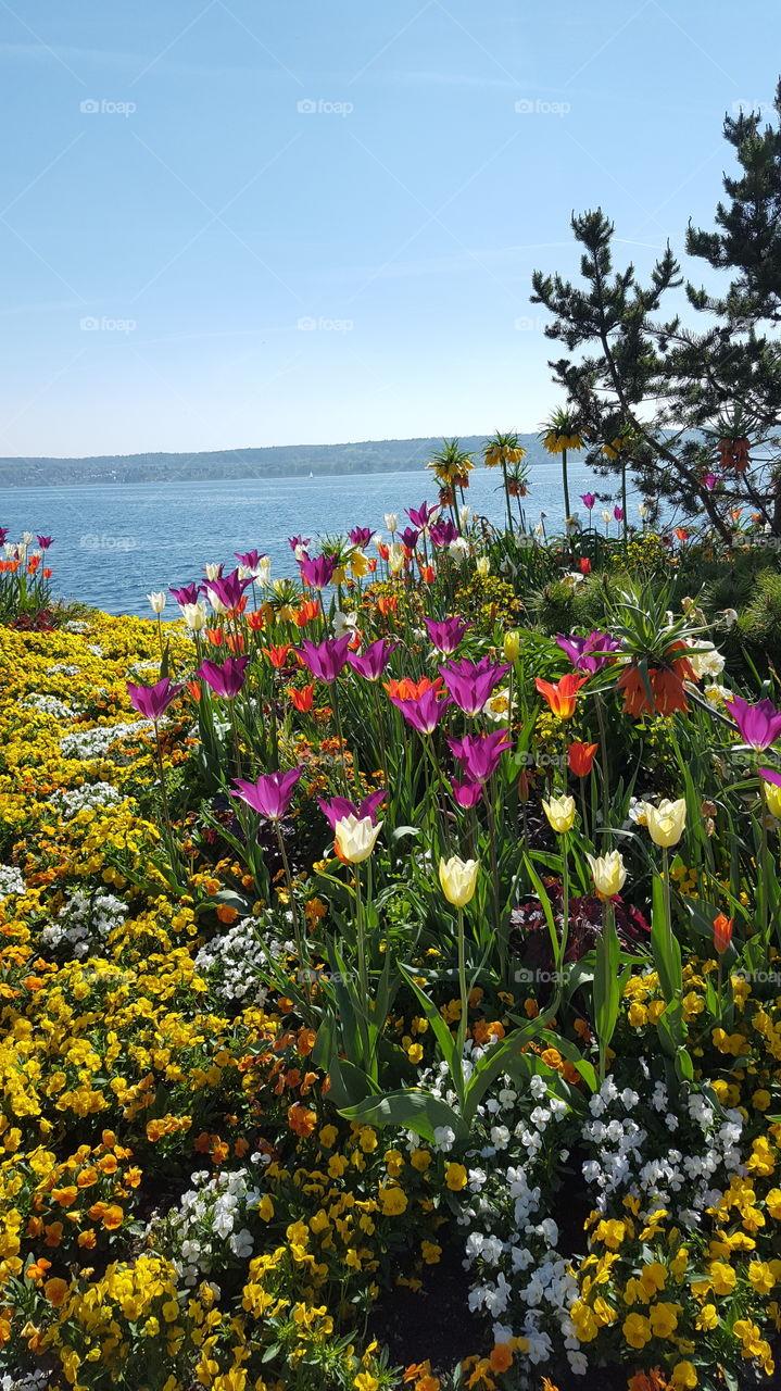 Überlingen Bodensee viele schöne Blumen