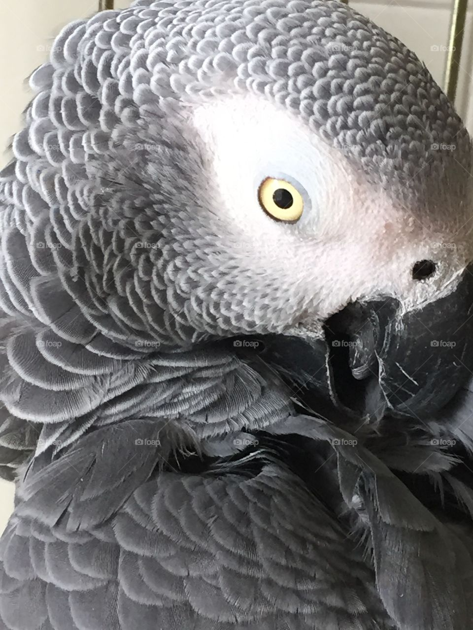 My Parrot !!!