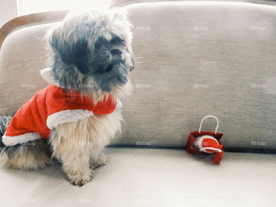 christmas dog with christmas gift