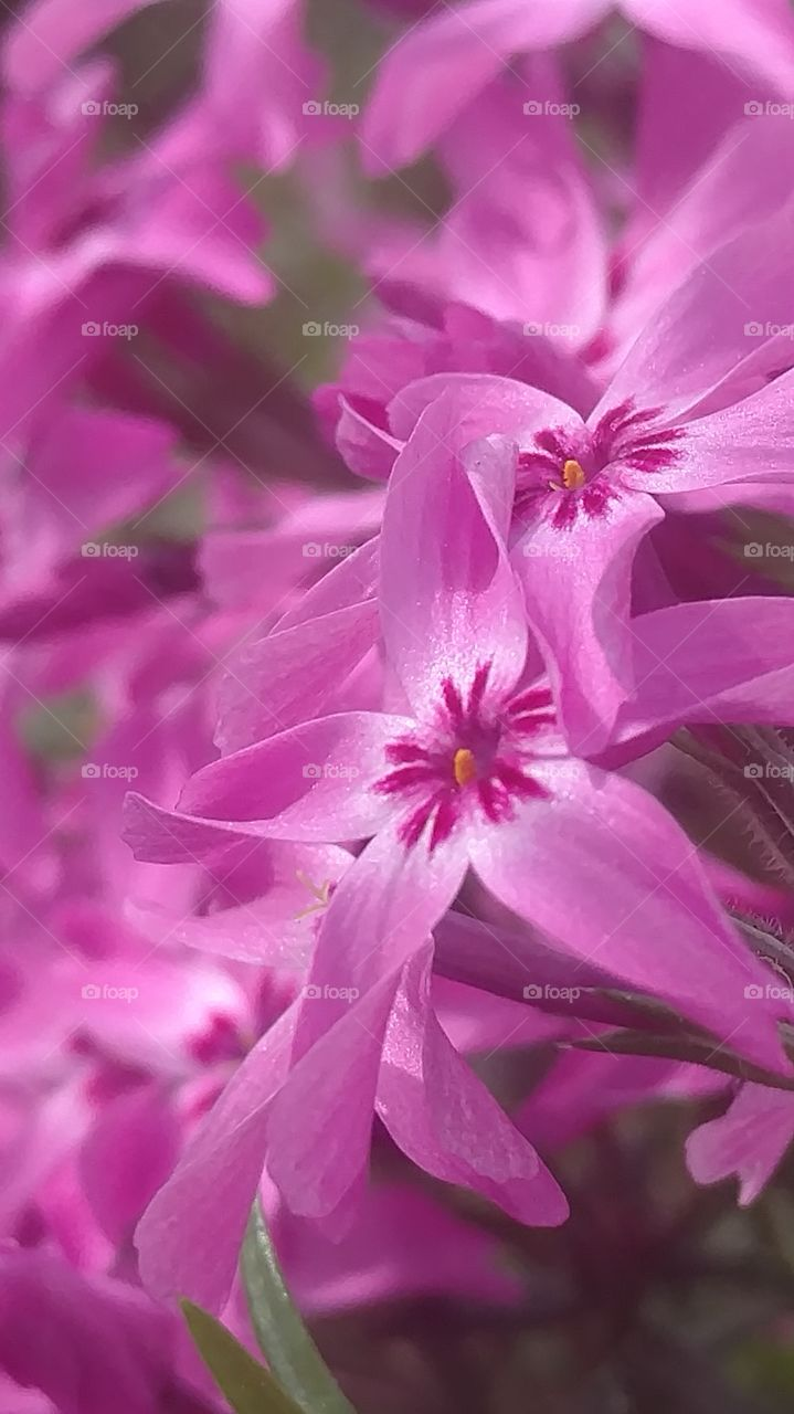 Flower, Nature, Flora, Garden, Floral