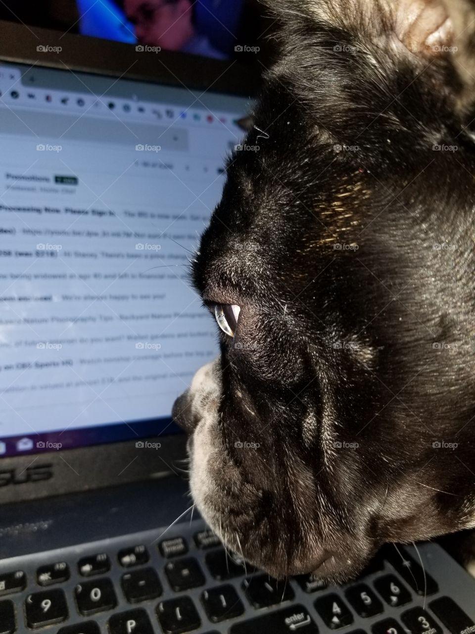 dog reading on computer