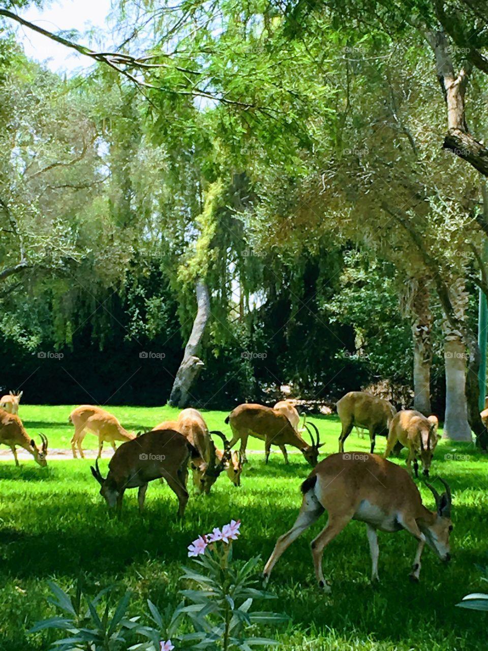 Deers park