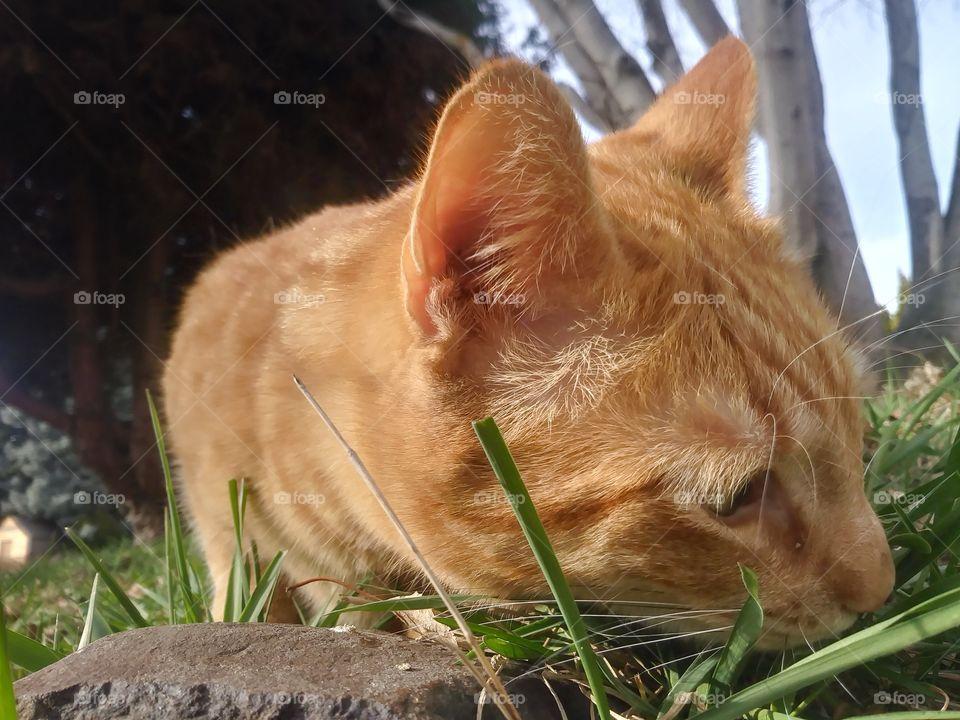An orange cat named Butterbean, enjoying the day 😻