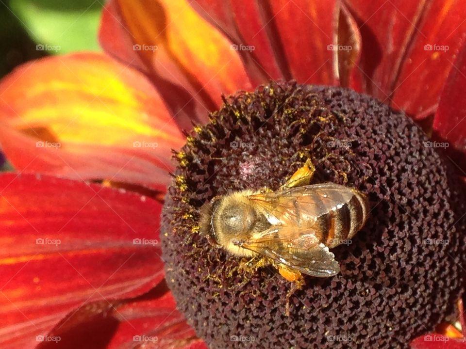 Macro shot of bee and flower