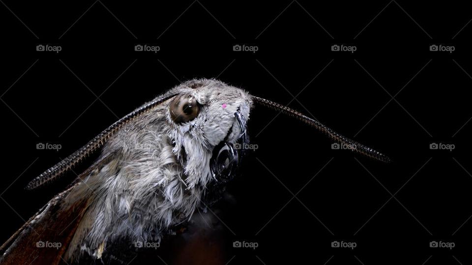 macro view of moth