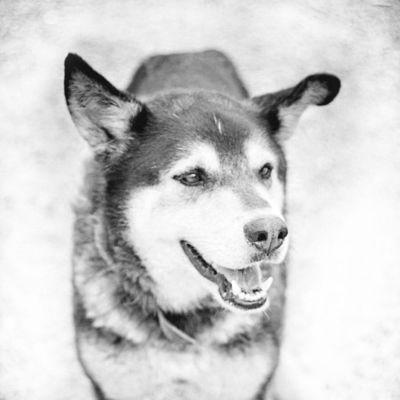 precioso perro