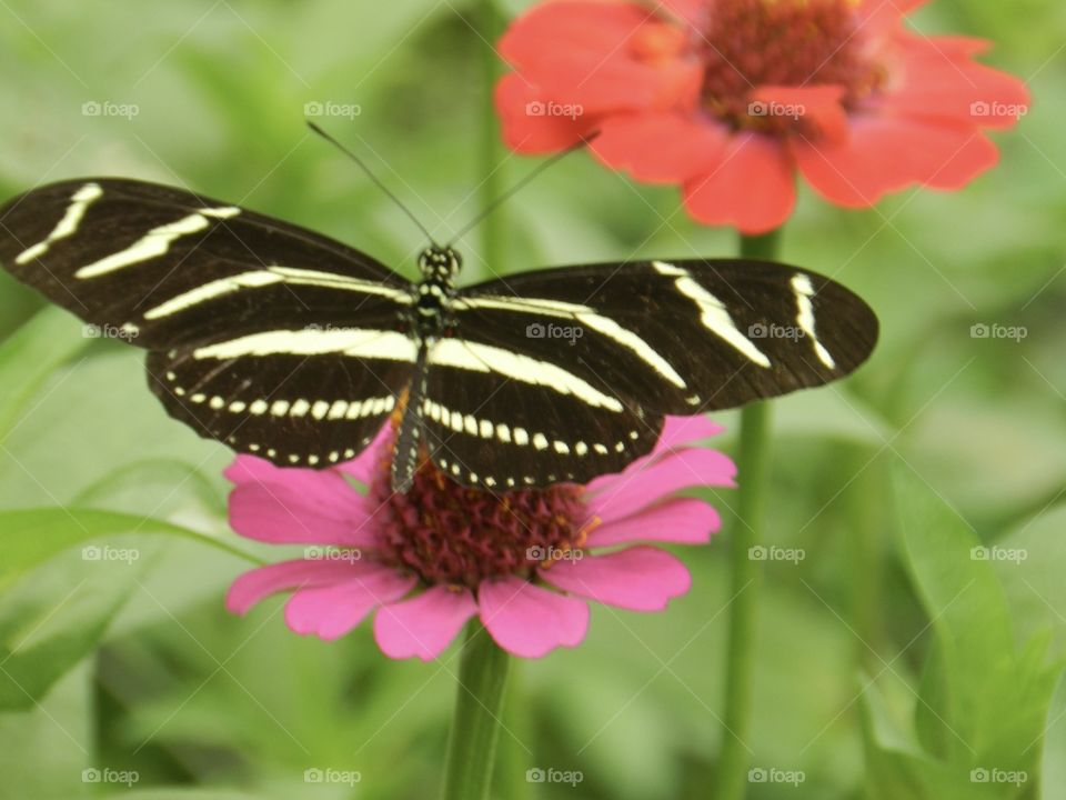Butterfly, Insect, Nature, Wing, Summer