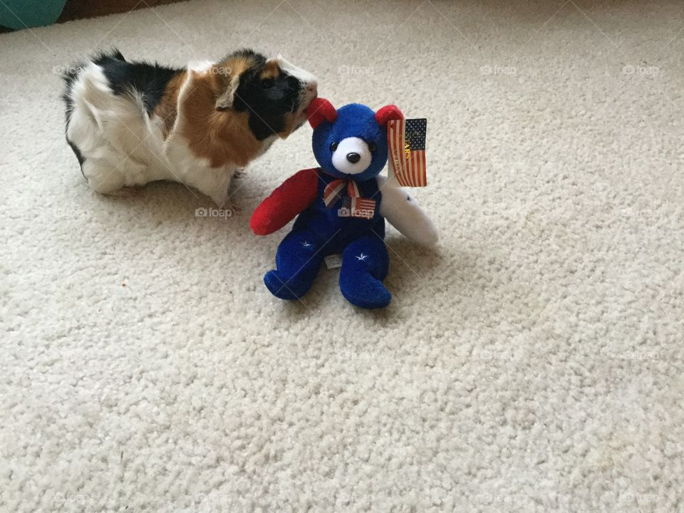 Dog, No Person, Toy, Cute, Canine