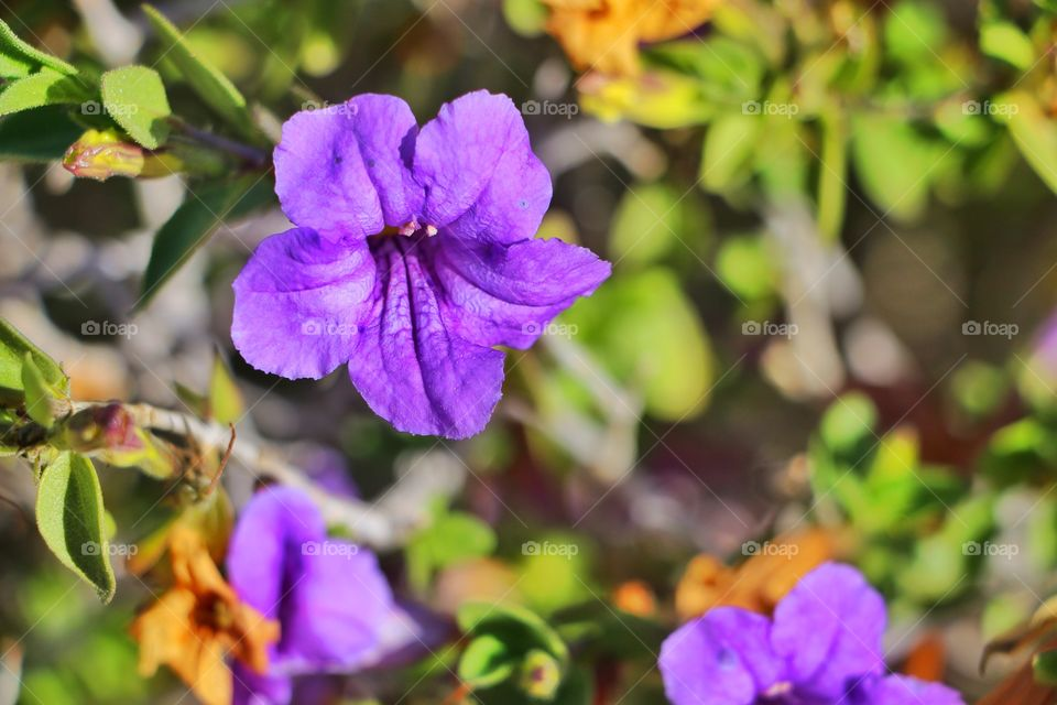 Purple Flowers during spring