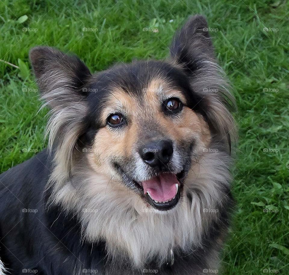dog cute pet portrait by dryair