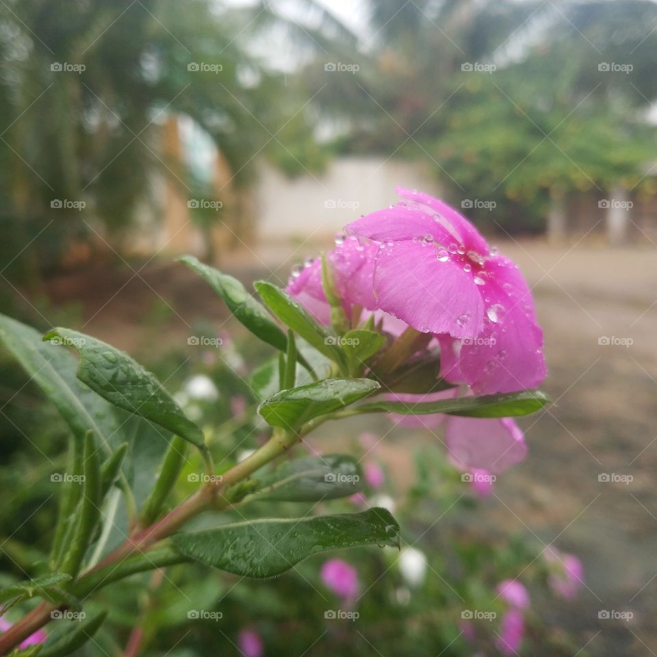 rain can't erase