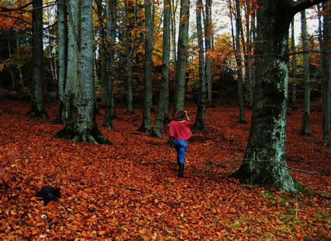 girl trees leaves forrest by merethe