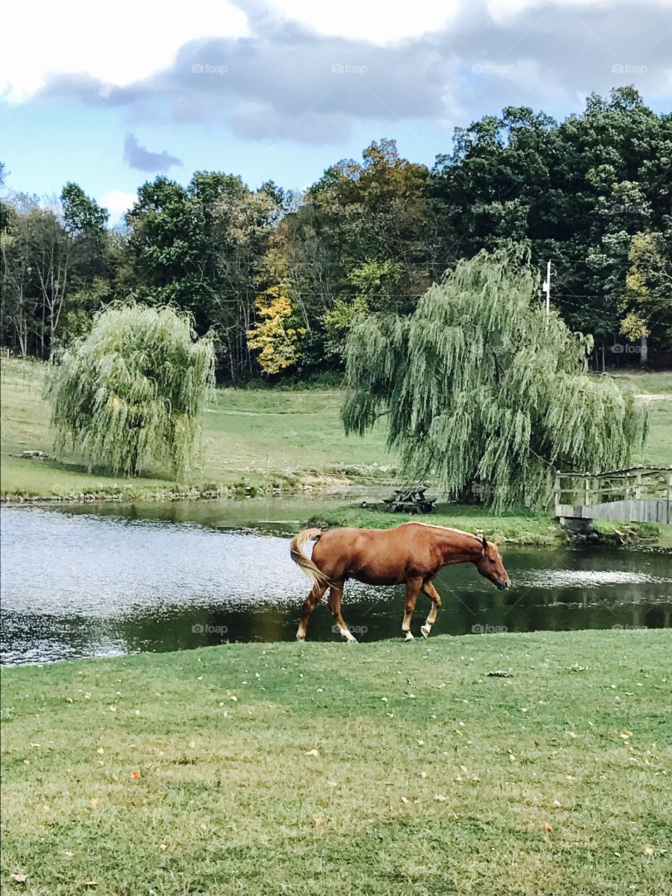 Countryside horse