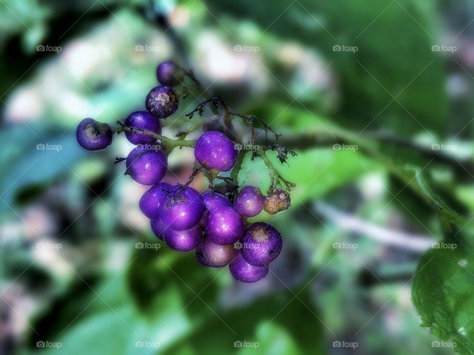 Late Summer Berries